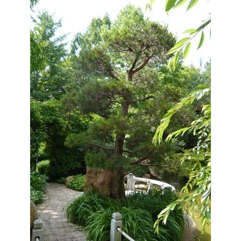 zensho shimokawa design of japanese gardens gallery. Black Bedroom Furniture Sets. Home Design Ideas
